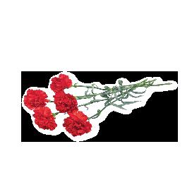 20 Yanvar <br/>Ümumxalq hüzn günüdür!